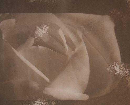 Menil Magnolia
