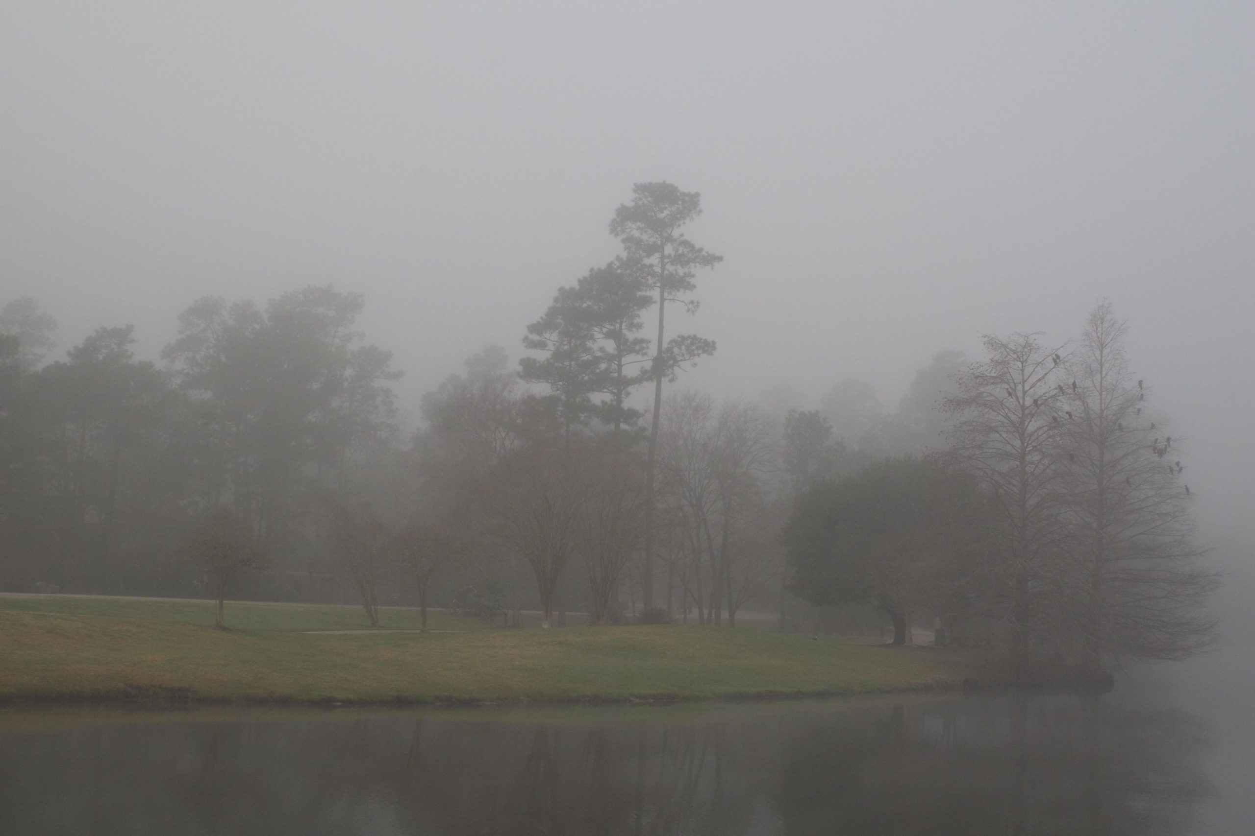 Some days are foggy
